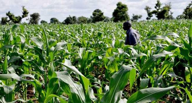 FARMLAND FOR SALE @ OJI RIVER, ENUGU STATE, NIGERIA