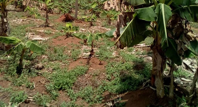 FARMLAND FOR SALE @ OGUN STATE, NIGERIA