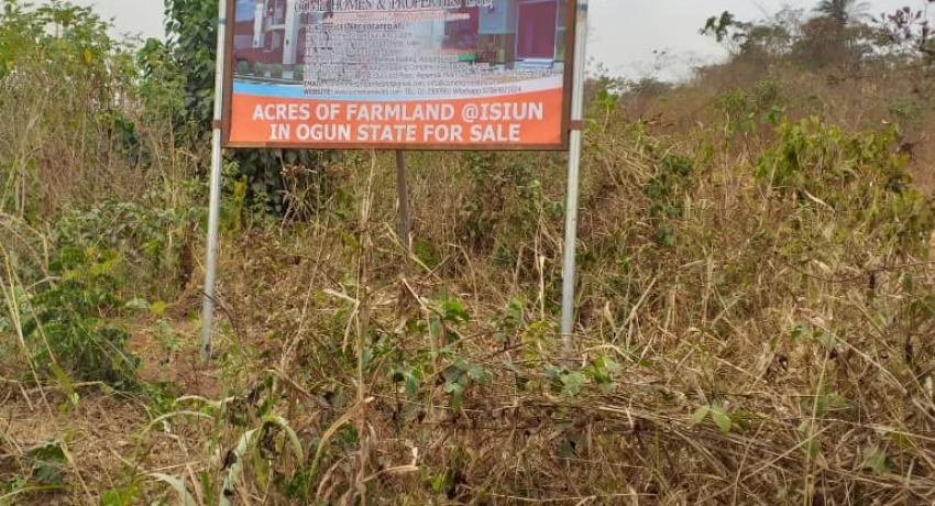 Acres of Farmland for Sale at Isiun, Ogun state, Nigeria