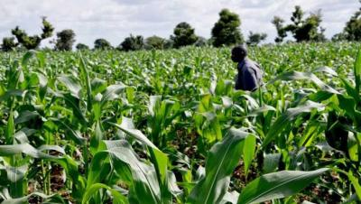 Farmland for Sale at Oji River Enugu